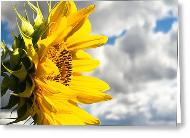 ah sunflower poem Irwin allen ginsberg (/ ˈ ɡ ɪ n z b ɜːr ɡ / june 3, 1926 – april 5, 1997) was an american poet, philosopher, writer, and activisthe is considered to be one of the leading figures of both the beat generation during the 1950s and the counterculture that soon followedhe vigorously opposed militarism, economic materialism and sexual repression and was known as embodying various aspects.