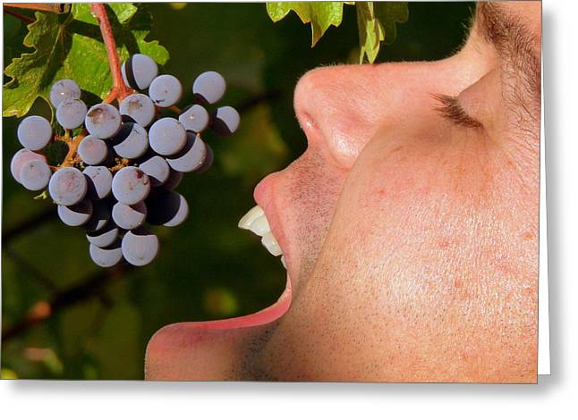 Ahh Wine Grapes Greeting Card by Jeff Lowe