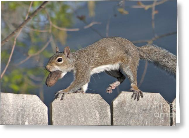 Ahhh Nuts Greeting Card by D Wallace