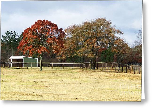 Aiken Greeting Card by Andrea Anderegg
