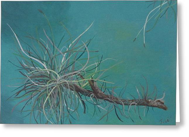 Air Plant Study Greeting Card by Hilda and Jose Garrancho