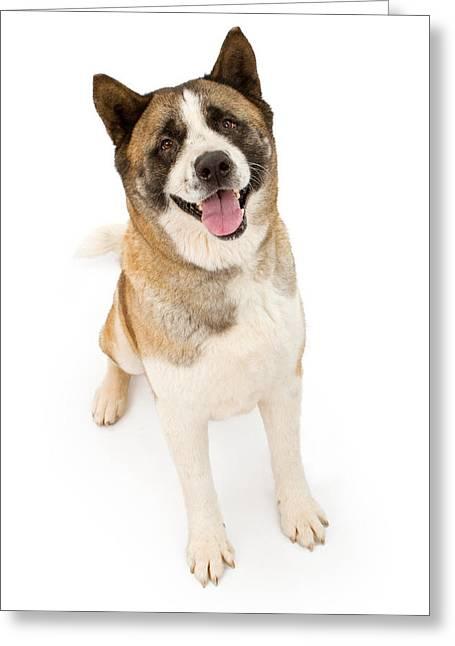 Akita Dog Sitting And Looking Forward Greeting Card by Susan Schmitz