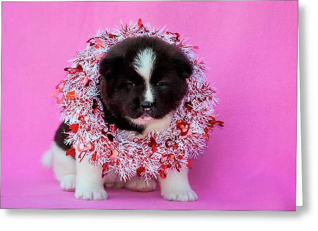 Akita Puppy On Valentine's Day (mr & Pr Greeting Card by Zandria Muench Beraldo