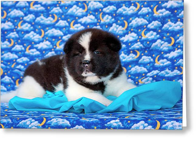 Akita Puppy With Moons And Stars (mr & Greeting Card by Zandria Muench Beraldo