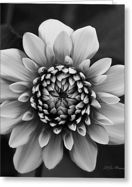 Ala Mode Dahlia In Black And White Greeting Card