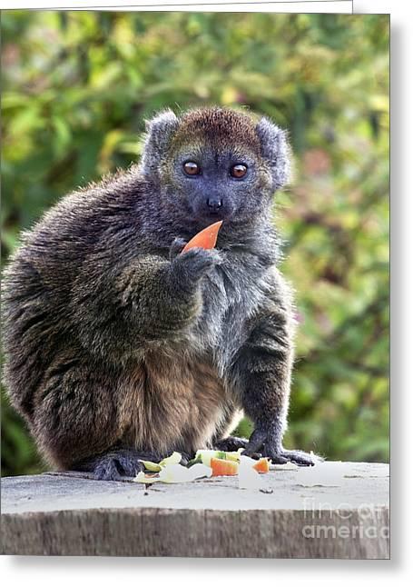 Alaotran Gentle Lemur Greeting Card