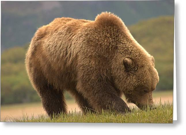 Alaska Kodiak Bear Greeting Card