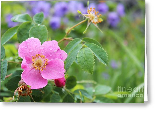 Alaska Wildflowers Greeting Card