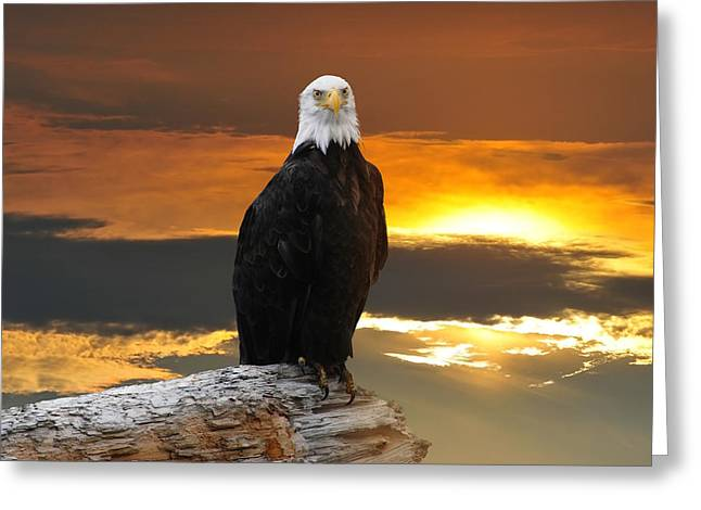 Alaskan Bald Eagle At Sunset Greeting Card