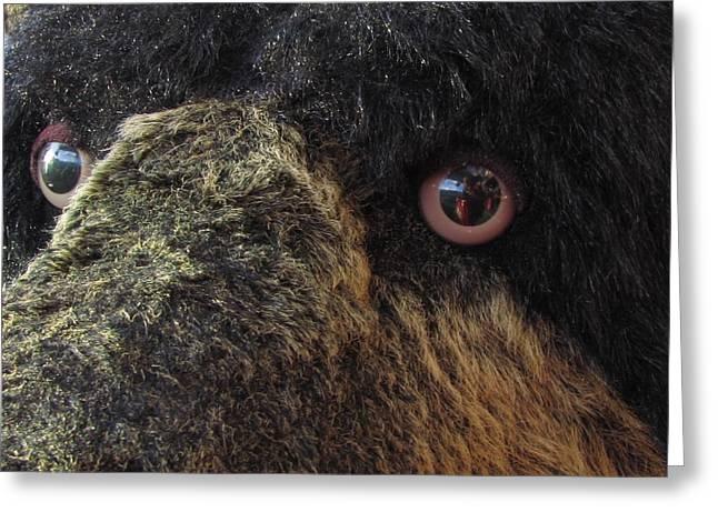 Greeting Card featuring the photograph Alaskan Bear by Jennifer Wheatley Wolf