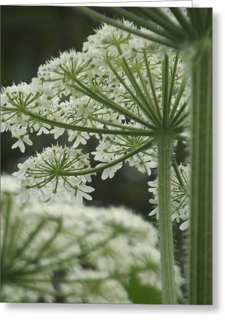 Alaskan Flora Greeting Card