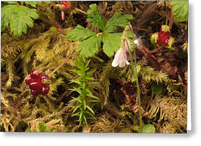 Alaskan Forest Floor Greeting Card
