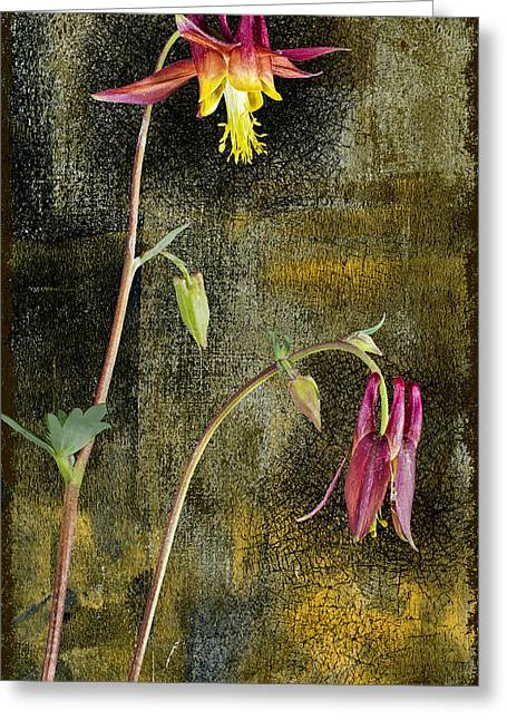 Alaskan Wild Columbine  Greeting Card