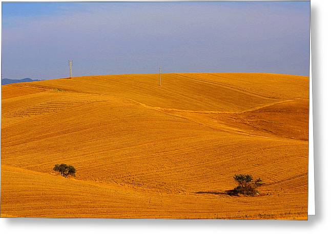 Trees In The Wheat Field Greeting Card