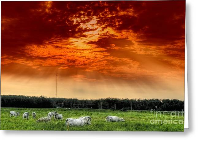 Greeting Card featuring the photograph Alberta Canada Cattle Herd Hdr Sky Clouds Forest by Paul Fearn