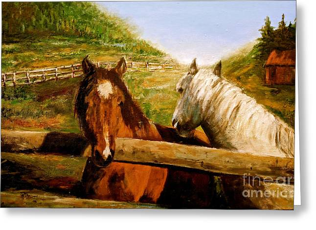 Alberta Horse Farm Greeting Card by Sher Nasser