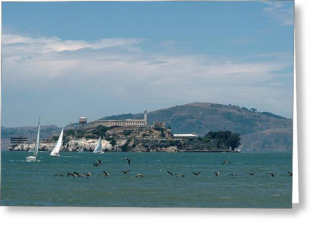 Alcatraz With Pelicans Greeting Card
