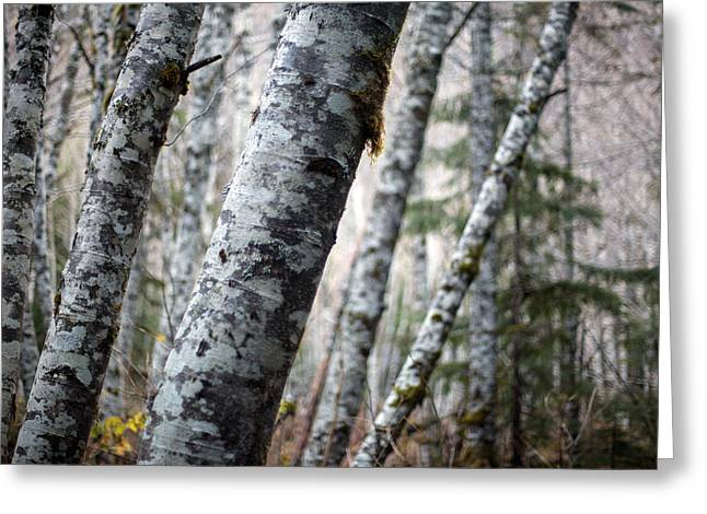 Alder Forest Leaning Greeting Card by Mike Reid