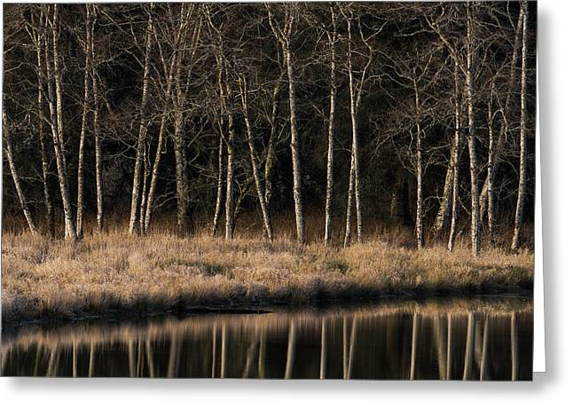 Alders Reflect In Water On A Winter Greeting Card by Robert L. Potts