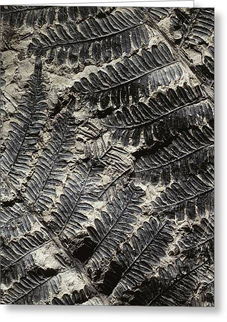 Alethopteris Seed Fern Fossil Greeting Card