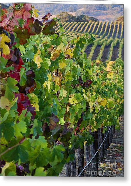 Alexander Valley Vineyard Greeting Card by Craig Lovell