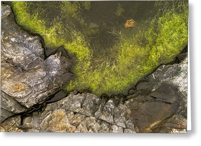 Algae Pool Abstract Photo Greeting Card by Peter J Sucy