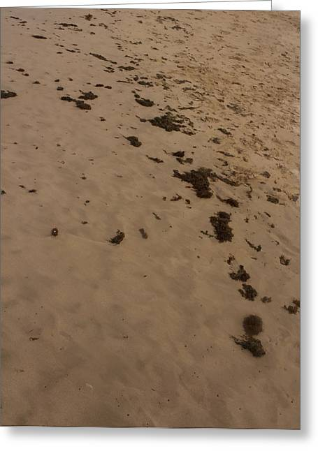 Algae Trail In The Sand Greeting Card by Sandra Pena de Ortiz