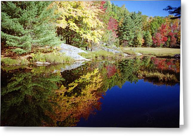 Greeting Card featuring the photograph Algonquin Reflection by David Porteus