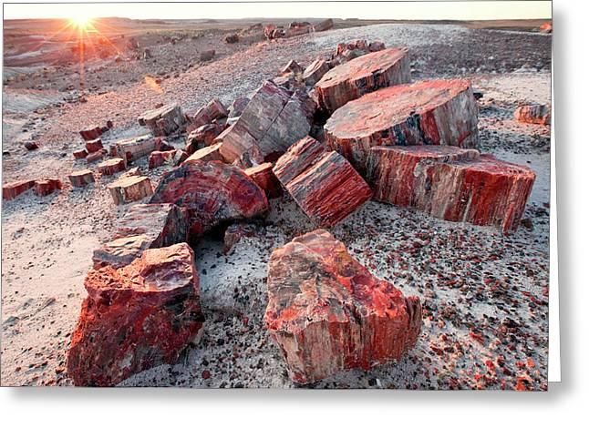 Alien Landscape, Petrified Logs Greeting Card
