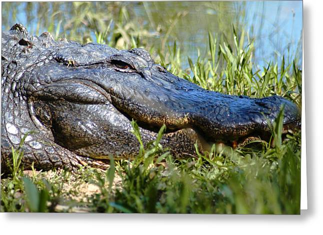 Greeting Card featuring the photograph Alligator Smiling by Bob Pardue
