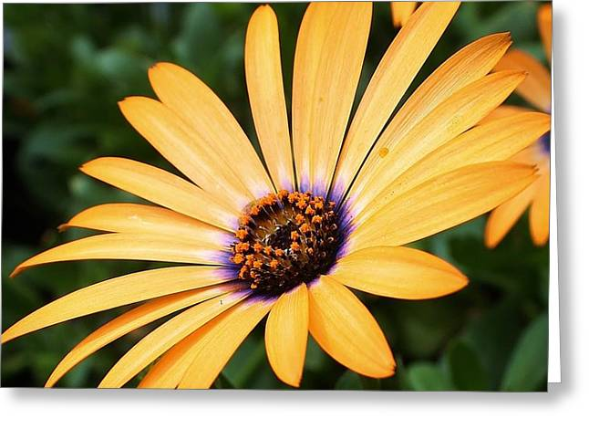 All A Glow Greeting Card by Bruce Bley