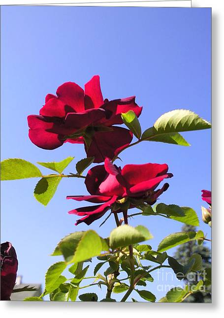 All About Roses And Blue Skies Iv Greeting Card by Daniel Henning