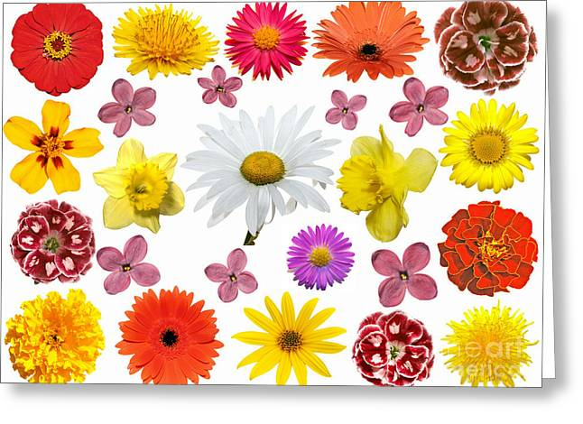 All Beauty Flower Closeup Greeting Card by Boon Mee
