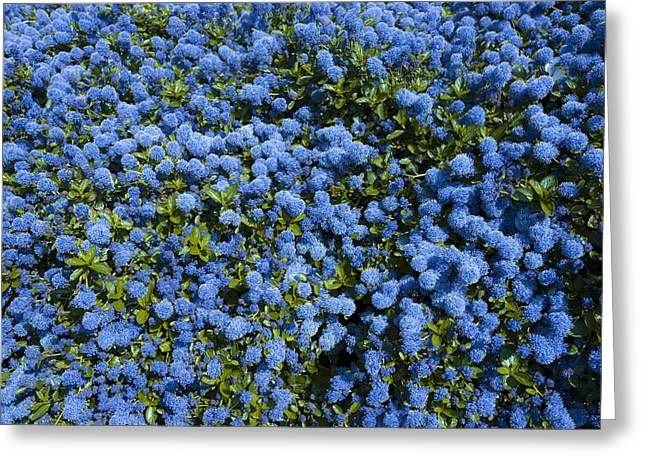 All Blue Greeting Card by Svetlana Sewell