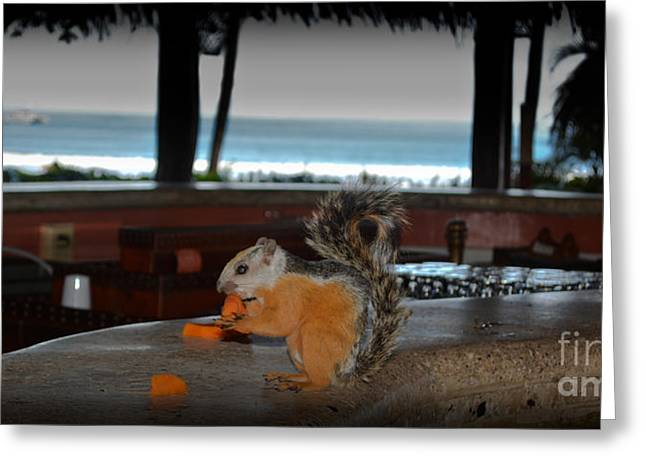 All Inclusive Squirrel Greeting Card by Gary Keesler