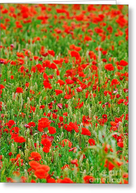 All Red Flower Beautiful Greeting Card by Boon Mee