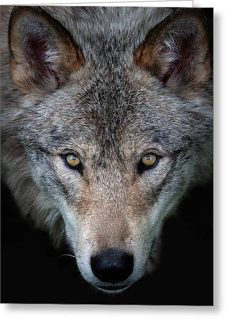 All The Better To See You - Timber Wolf Greeting Card