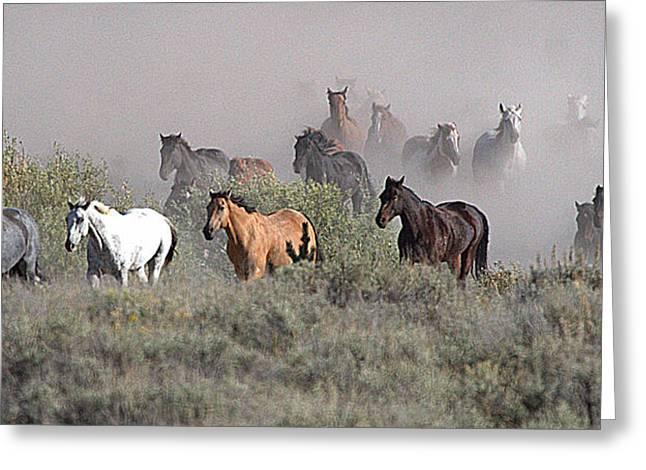 All The Pretty Horses Greeting Card by Elizabeth Eldridge
