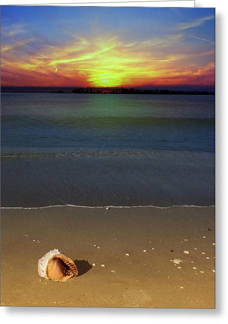 All Washed Up Greeting Card by Regina  Williams