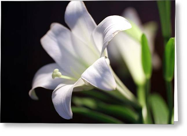 Greeting Card featuring the photograph Allelujah by Cathy Donohoue