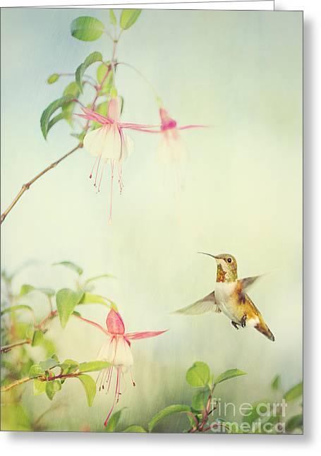 Allen's Hummingbird And Fuschia Greeting Card