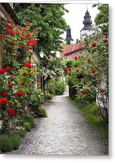 Alley Of Roses Greeting Card