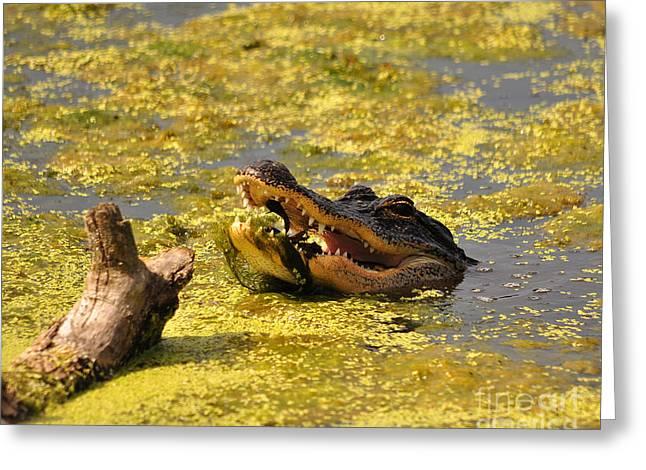 Alligator Ambush Greeting Card by Al Powell Photography USA