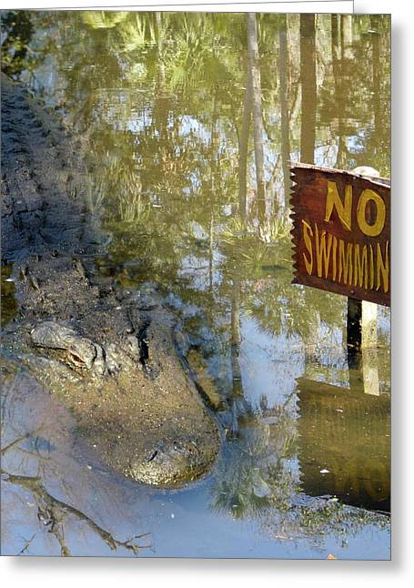 Alligator And No Swimming Sign Greeting Card by Tony Craddock