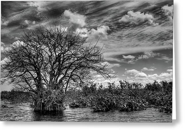 Greeting Card featuring the photograph Alligator Country by Geraldine Alexander