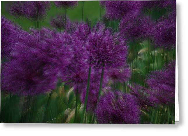 Allium Double Exposure Greeting Card