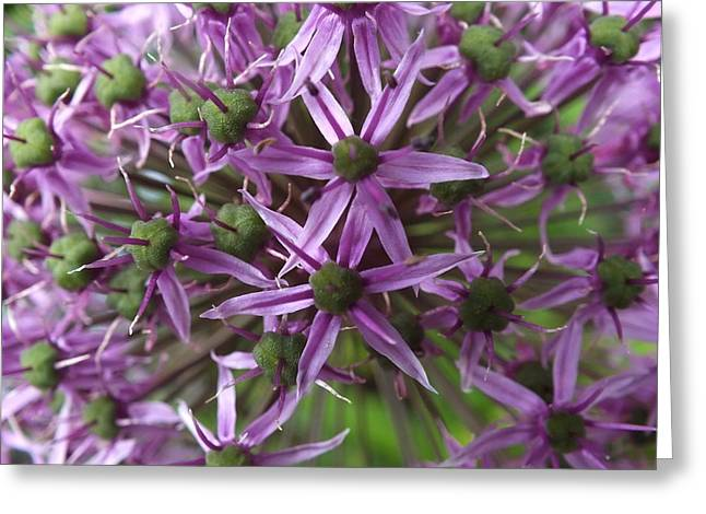 Greeting Card featuring the photograph Allium by Gene Cyr