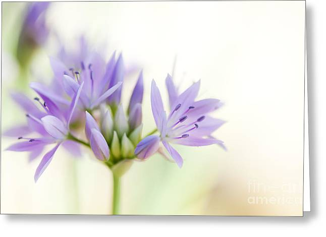 Allium Unifolium Eros Greeting Card by Tim Gainey