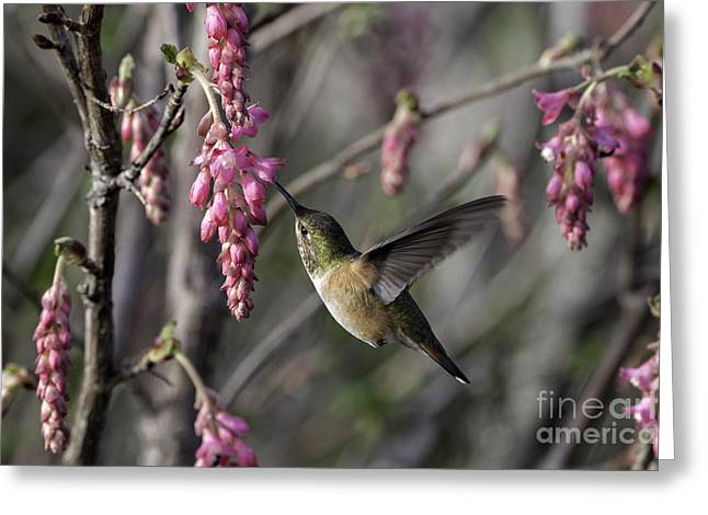 Almost Spring Greeting Card by Tim Moore