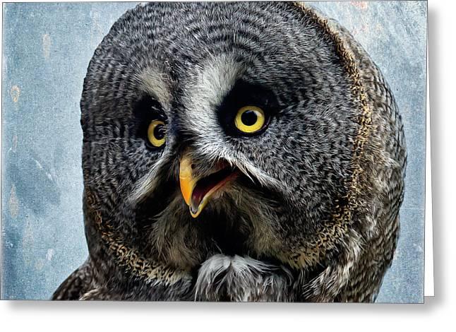 Allocco Della Lapponia - Tawny Owl Of Lapland Greeting Card